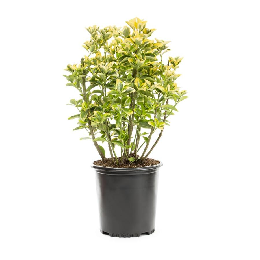 Plants For Your Porch And