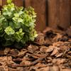 2-cu ft Light Brown and Gold Mini Nuggets Pine Bark Mulch