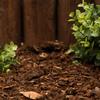 2-cu ft Dark Brown Pine Bark Mulch