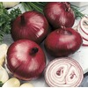 Ferry-Morse Red Burgermaster Onion Plant (LSP0154)