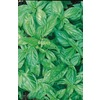 Ferry-Morse Genovese Basil (LSP0011)
