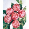  3.25-Gallon Santa Rosa Semi-Dwarf Plum (L3664)