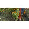 Garden Weasel 6-in Aluminum Multipurpose Garden Hand Tool