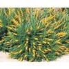 1.5-Gallon Yellow Broom (L3907)