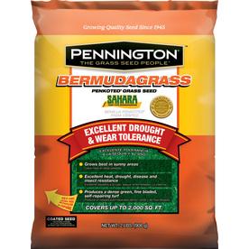 Pennington Sahara 2-lb Bermuda Grass Seed