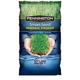 Pennington Smart Seed 3-lb Perennial Ryegrass Seed