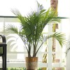 1.94-Gallon Majesty Palm (LTL0062)