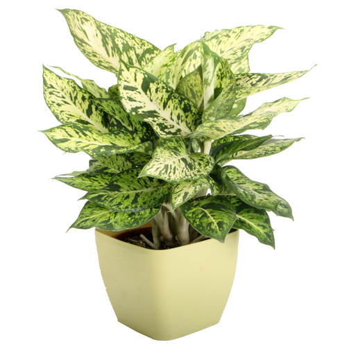 decorative plants tortoise forum