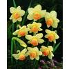 1.25 Quart(S) Daffodil Bulbs