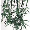1.4-Quart Spider Plant (L03929)