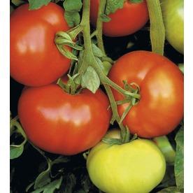 3 Quart(S) Tomato Assortment Plant (L14917)