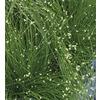 1-Quart Fiberoptic Grass (LW03159)
