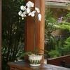 4 oz Phalaenopsis Orchid (L20963hp)