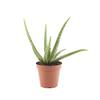 11-oz Aloe Vera (L4365)