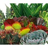 1-Quart Cacti and Succulents (Mixed) (LWALTCS)