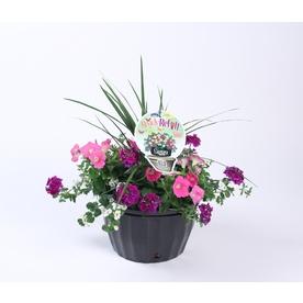 1.5-Gallon Petunia