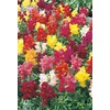 3-Quart Snapdragon (L3278)
