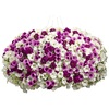 3-Gallon Trailing Petunia