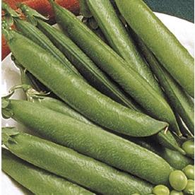 2.5-Gallon Sugar Snap Pea Plant (L20569)