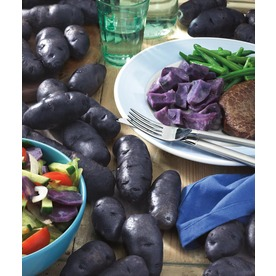 5-Count Adirondack Blue Potato Plant (LB21584)