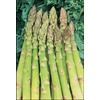 6-Count Mary Washington Asparagus Plant (LB21609)