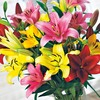 10-Count Asiatic Lily (LW01857)