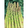 3-Pack Jersey Giant Asparagus Plant (LB21608)
