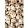 4-Pack Garlic Plant (L20406)