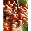 8-Pack Shallots Plant (L20409)