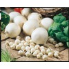60-Pack White Onion Plant (LB517)
