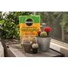 Miracle-Gro 8-Quart Cactus Soil