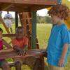 Swing-N-Slide Chesapeake Ready-to-Assemble Kit Residential Wood Playset with Swings