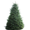 6-7-ft Fresh Noble Fir Christmas Tree