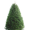 5-6-ft Fresh Douglas Fir Christmas Tree