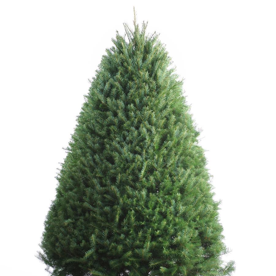 fresh christmas trees utah
