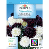 Burpee Black and White Mix Scabiosa Seed Packet