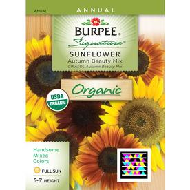 Burpee Sunflower Organic Flower Seed Packet