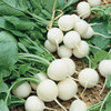 Burpee White Beauty Radish Seed Packet