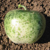Burpee Apple Gourd Seed Packet