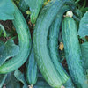 Burpee Suyo Long Cucumber Seed Packet