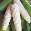 Burpee Burpee's Triple Crown XP White Hybrid Sweet Corn Seed Packet