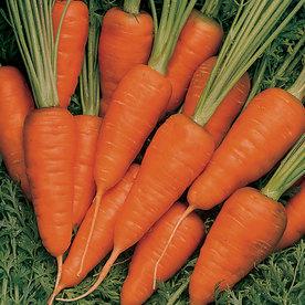 Burpee Short 'N Sweet Carrot Seed Packet