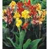  2.25-GAL CANNA PREMIUM