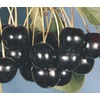 3.74-Gallon Black Tartarian Cherry Tree (L1256)