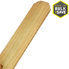 Severe Weather Pressure Treated Pine Fence Picket (Common: 1/2-in x 4-in x 6-ft; Actual: 0.4375-in x 3.5-in x 6-ft)