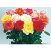1-Quart Miniature Rose (L5965)