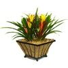 BETTER-GRO 1.75-Gallon Bromeliad Temporary (003)