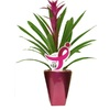 BETTER-GRO 1-Quart Bromeliads Temporary (007)