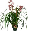 Gubler 1.56-Quart Cymbidium in Planter