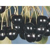 3.84-Gallon Black Tartarian Cherry Tree (L1256)